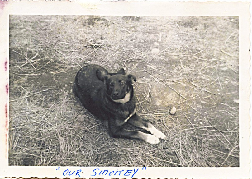 Somey - Our wonderful family dog -- I know we still had her by fall 1963