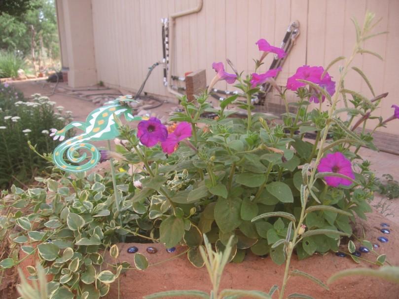 Adobe planter