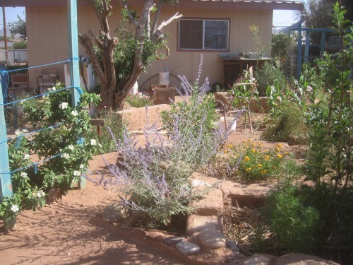 In our 100+ degree heat without rain takes effort to keep a garden alive - well.....