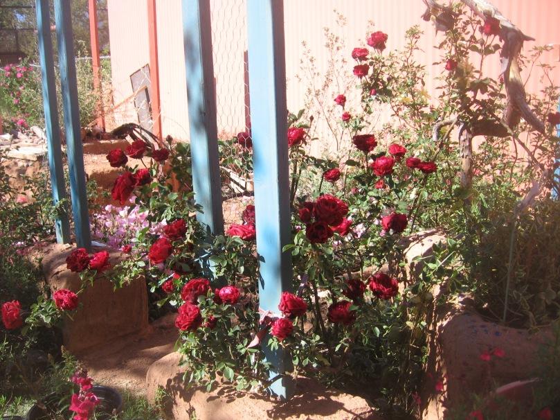 042213 Back dark red rose