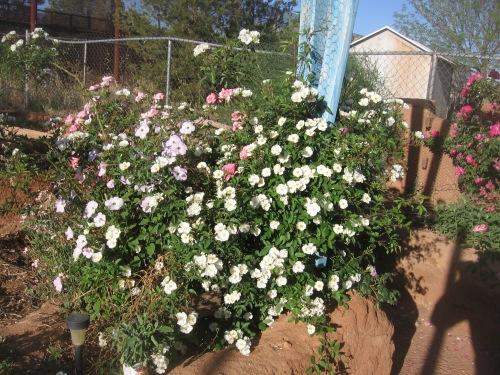 garden april 30 2013 002
