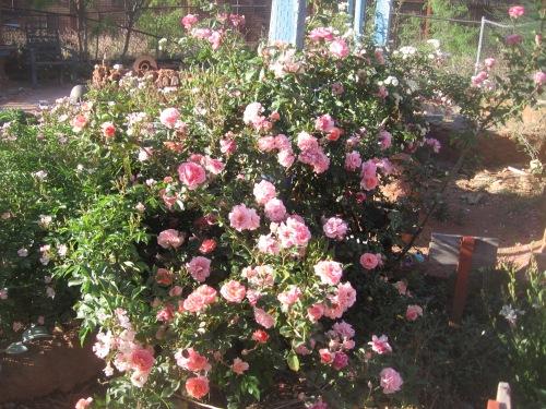 garden april 30 2013 005