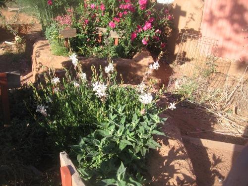 garden april 30 2013 006