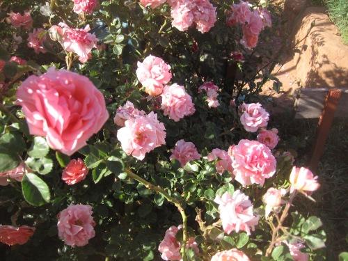 garden april 30 2013 007
