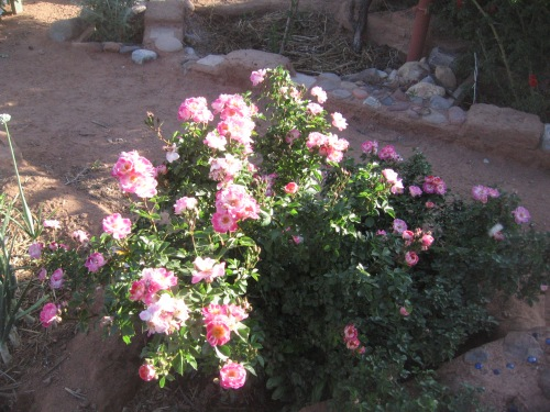 garden april 30 2013 008
