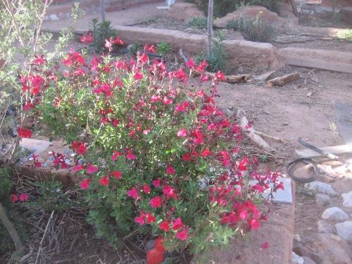 garden april 30 2013 011