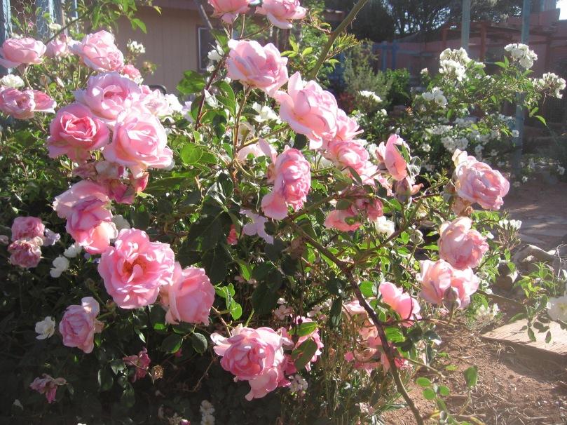garden april 30 2013 013