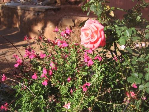 garden april 30 2013 015