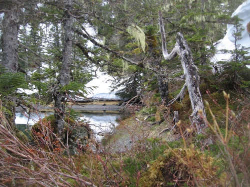 06 2013 alaska forest water