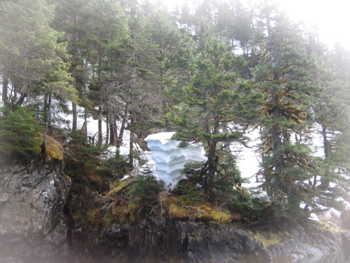 06 2013 alaska snow tree