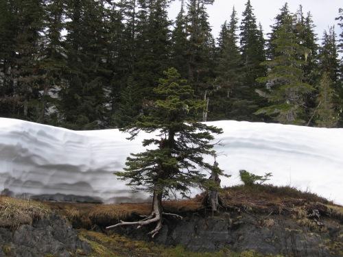 06 2013 alaska snowbank 2