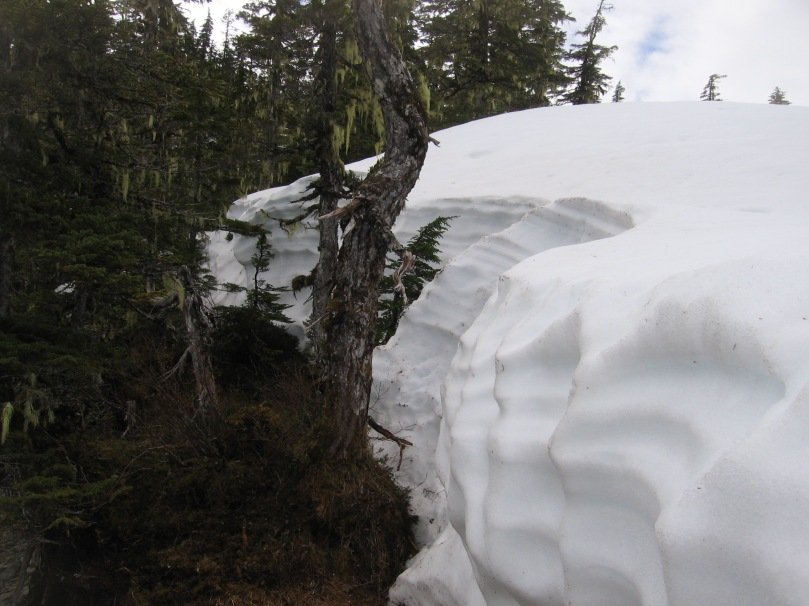 06 2013 alaska tree big snowbank